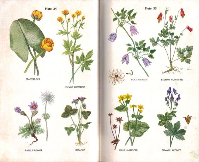 Wherry Wild Flower Guide color artwork