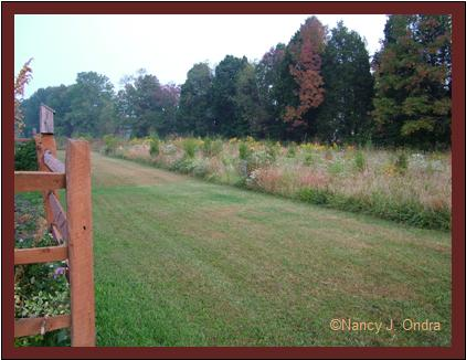 Back hedgerow and middle meadow Sept 27 07