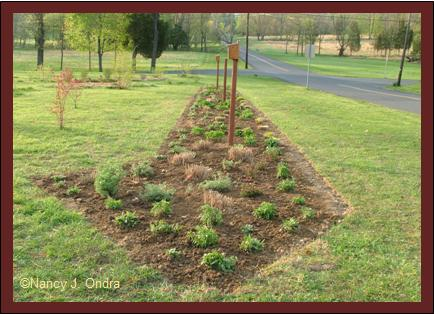 Long Border after planting April 25 08