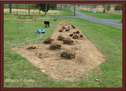 Long Border planting in progress April 20 08