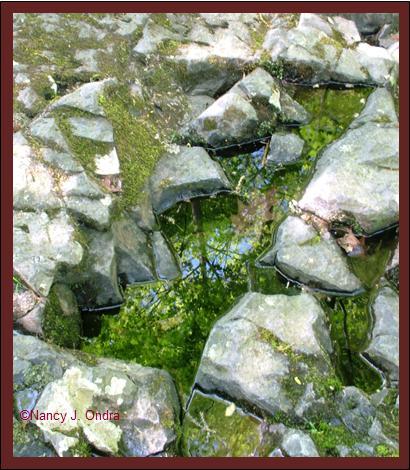 Angular pools at Ringing Rocks May 8 08