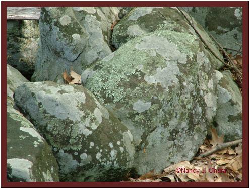 Lichened boulder at Ringing Rocks May 8 08
