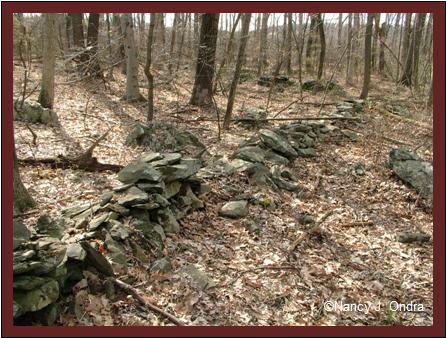 Remnant stone walls Milford Township, PA