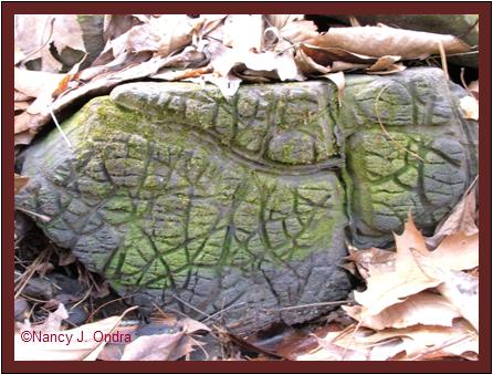 Rock markings Milford Township, PA