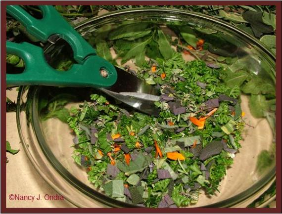 chopped-up-herbs-for-mustard-nov-21-08