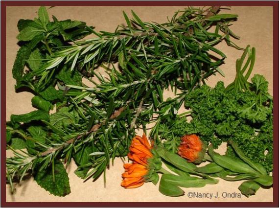 herbs-for-mustard-2-nov-21-08