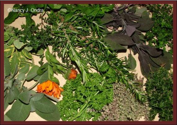 herbs-for-mustard-nov-21-08