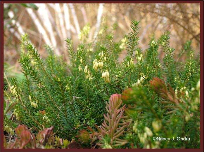 erica-golden-starlet-dec-14-08
