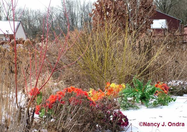 bloom-day-jan-09-10