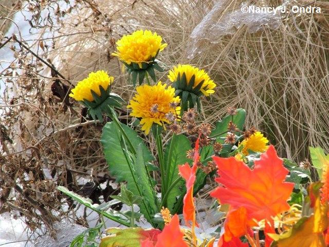 bloom-day-jan-09-3