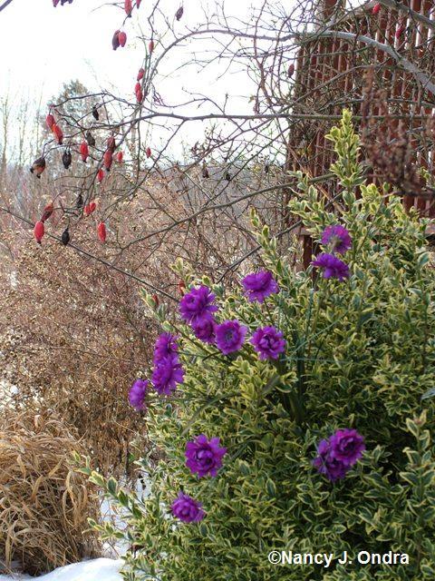 bloom-day-jan-09-5