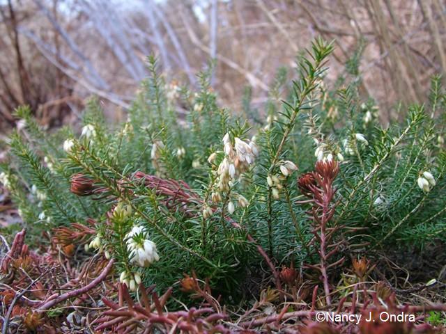 erica-golden-starlet-feb-14-09