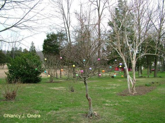 ova-on-larger-tree-2