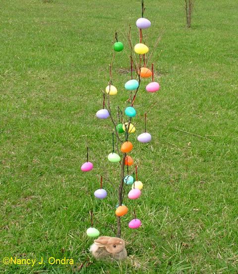 ova-on-small-tree1
