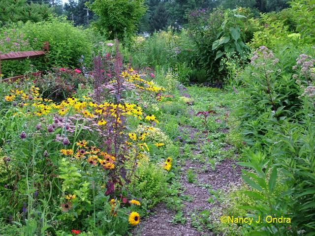 Front Garden July 28 09