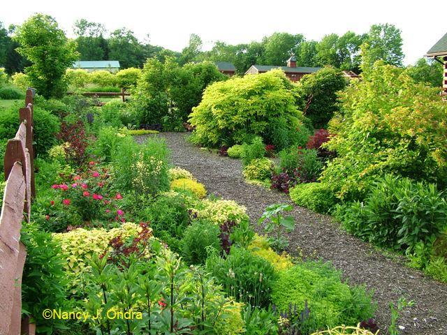 Front garden June 1 09