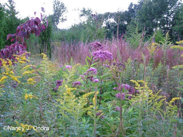 Sept 09 Meadow 2