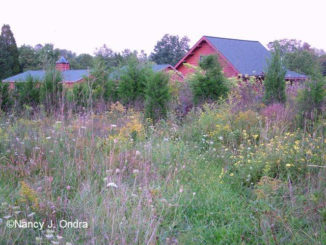 Sept 09 Meadow 3
