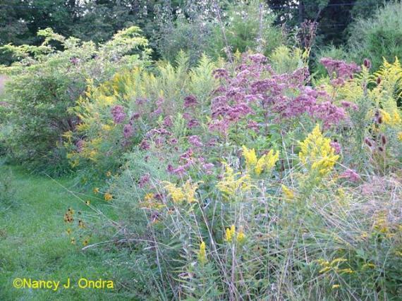 Sept 09 Meadow