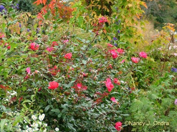 Rosa Radrazz Oct 13 09