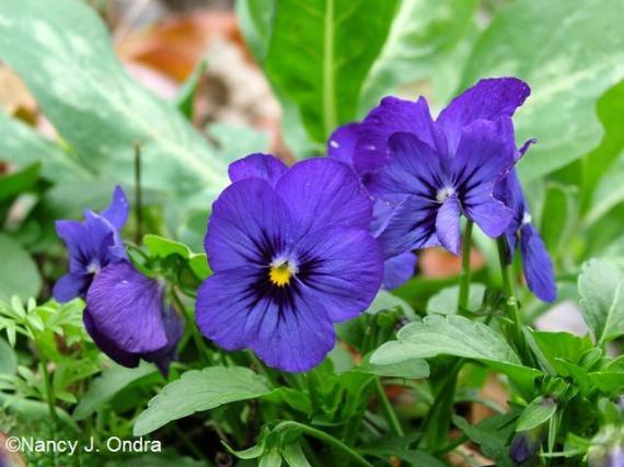 Viola Nov 13 09