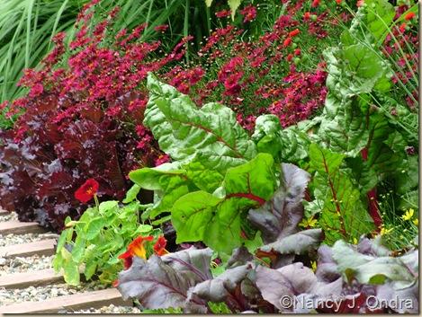 Chard Bright Lights Coreopsis Limerock Ruby Lettuce Merlot July 7 08
