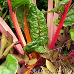 Chard Bright Lights selection 2 Aug 25 08