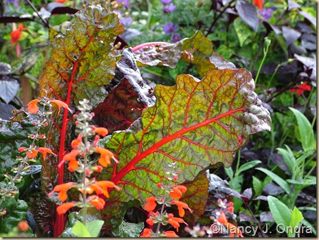 Chard Bright Lights selection 4 Oct 4 08