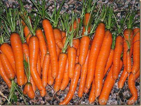 Carrot Meridia Nov 30 07