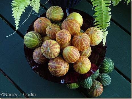 Plum granny ripe and unripe Sept 17 07
