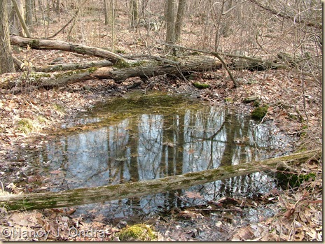 Vernal pool March 11 08