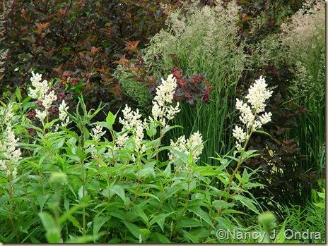 Persicaria polymorpha Calamagrostis x acutiflora 'Karl Foerster' Physocarpus opulifolius 'Centerglow'