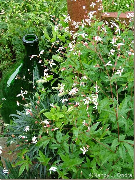 Porteranthus stipulatus