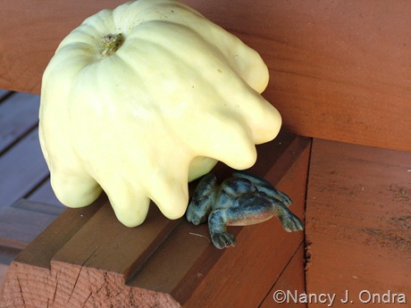 'Yugoslavian Finger Fruit' squash late July