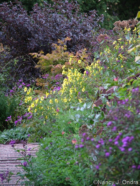 Vernonia, Helianthus 'Lemon Queen', Acer palmatum, and Physocarpus opulifolius 'Monlo' (Diabolo) Sept 14 10