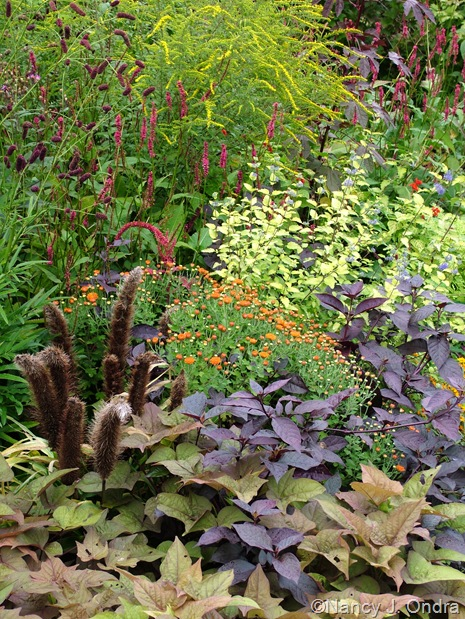 Pennisetum glaucum 'Jade Princess', Persicaria amplexicaulis 'Taurus', Sanguisorba tenuifolia, Solidago rugosa 'Fireworks', Caryopteris incana seedling, Alternanthera denata 'Purple Knight', and an orange chrysanthemum Sept 14 10