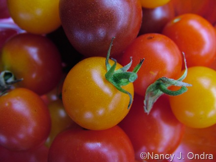Lycopersicon esculentum (cherry tomatoes)