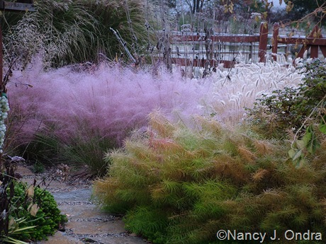 Muhlenbergia capillaris and Amsonia hubrichtii