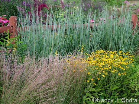 Sorghastrum nutans 'Sioux Blue' with Schizachyrium scoparium and Rudbeckia maxima
