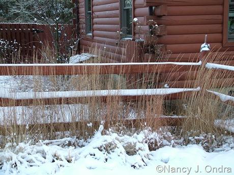 Calamagrostis x acutiflora 'Karl Foerster' in snow