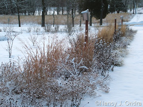Long border at Hayefield in snow