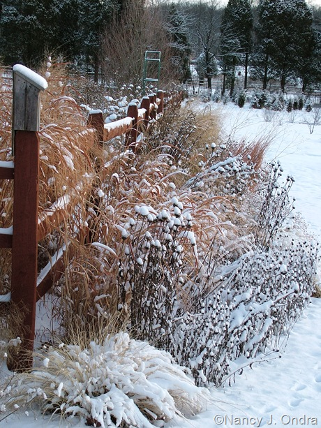 Easter border at Hayefield in snow