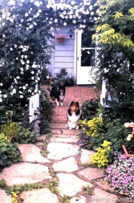 Rose on white arbor in Ondra garden Emmaus 2000