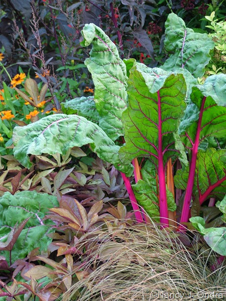 Chard 'Bright Lights' with Carex 'Toffee Twist' and Ipomoea batatas 'Sweet Caroline Bronze'