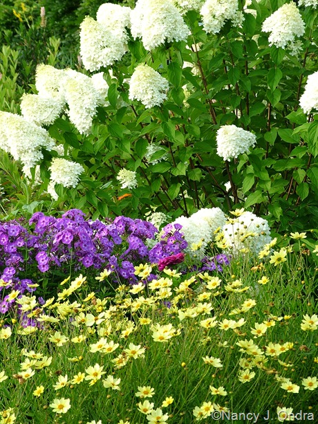 Hydrangea paniculata 'Limelight' with Phlox 'Nicky' and Coreopsis 'Full Moon' [August 8, 2009]