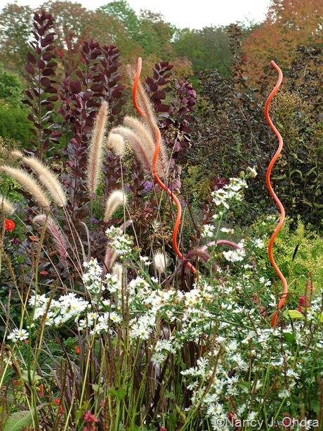 Cotinus coggygria 'Velvet Cloak' behind Pennisetum setaceum 'Rubrum' amd Symphyotrichum [October 24, 2008]