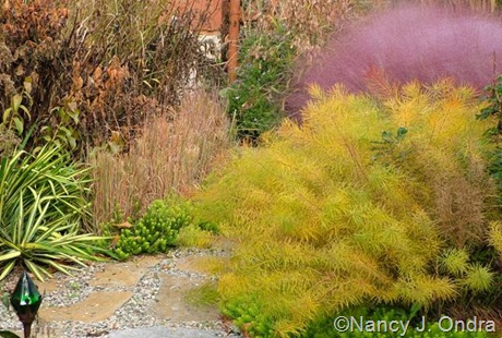 Amsonia hubrichtii with Muhlenbergia capillaris [October 22, 2006]