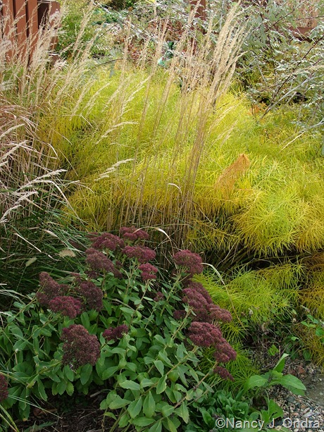 Amsonia hubrichtii with Sedum 'Autumn Fire' and Calamagrostis x acutiflora 'Karl Foerster' [November 8, 2007]