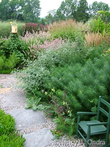 Amsonia hubrichtii with Rubus thibetanus 'Silver Fern' [August 23, 2006]