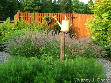 Amsonia hubrichtii with Allium sphaerocephalon and Pennisetum orientale 'Karley Rose' [July 1, 2005]
